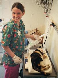 Vet Tech weighs cat