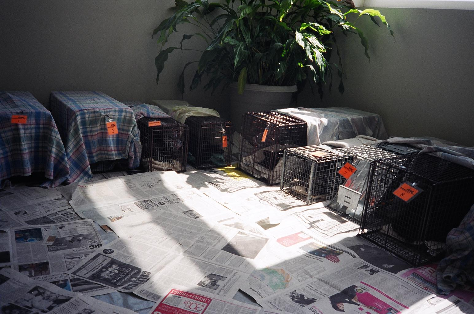 Cats in their traps in recovery room